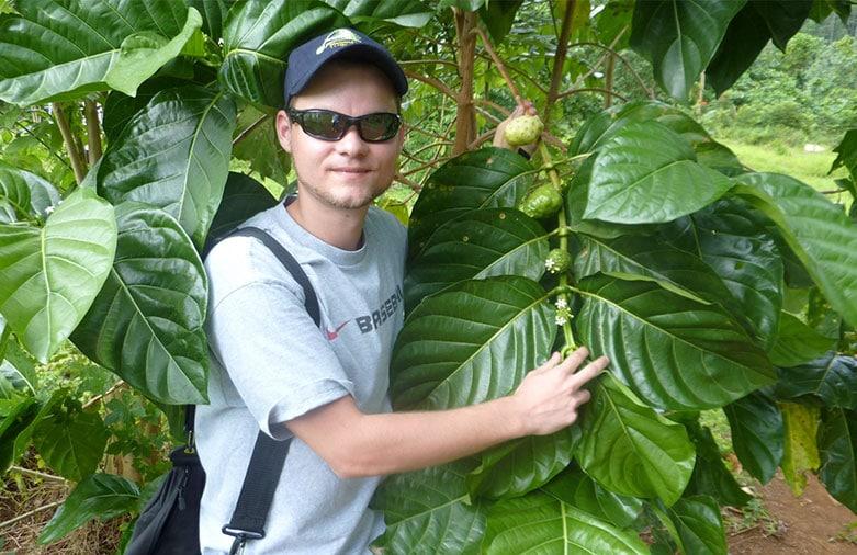 Mario-Urschitz-Morinda-Nonipflanzen
