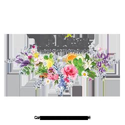 LeReve-Australia-MLM-Network-Marketing