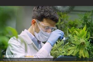 Thailand-Cannabis-Hanf